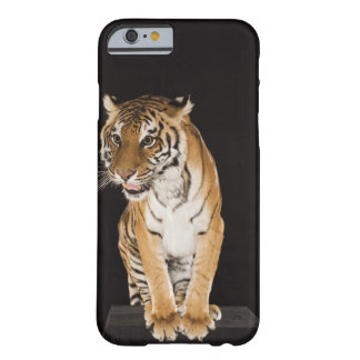 Tiger sitting on platform 2 barely there iPhone 6 case