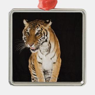 Tiger sitting on platform 2 Silver-Colored square decoration