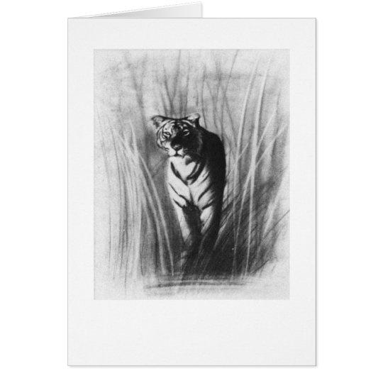 Tiger sketch card