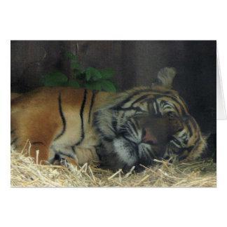 Tiger Sleeping? Card