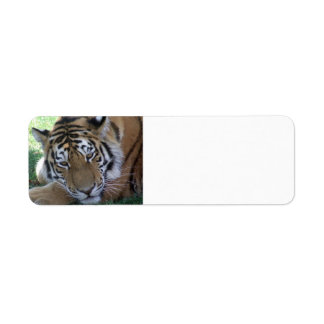 Tiger-sleeping-in-the-grass WILD ANIMALS BIG CATS