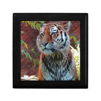 Tiger Small Square Gift Box