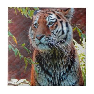 Tiger Small Square Tile