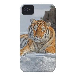 Tiger Snow Portrait iPhone 4 Cover
