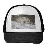 Tiger Stalking Ball Cap