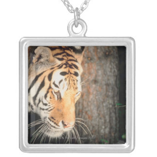 Tiger stalking silver plated necklace
