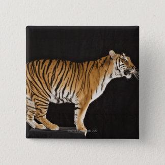 Tiger standing on platform 15 cm square badge