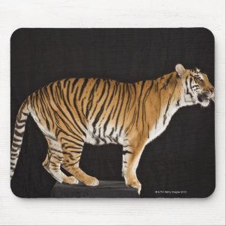 Tiger standing on platform mouse mat