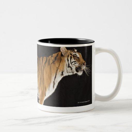 Tiger standing on platform coffee mugs