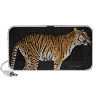 Tiger standing on platform iPhone speakers