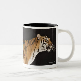 Tiger standing on platform Two-Tone coffee mug