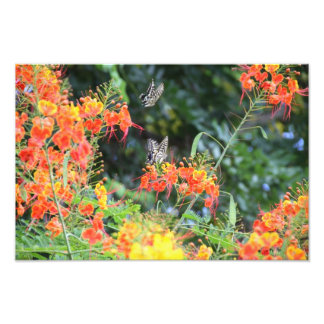 Tiger Striped Butterfly on Lacy Red Flowers Print Photo