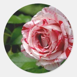 Tiger Stripes Rose Round Sticker