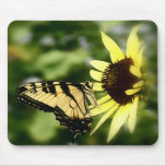 Tiger Swallowtail butterfly Mouse Pads
