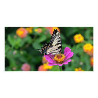 Tiger Swallowtail Butterfly on top of Aster Flower Photo Greeting Card