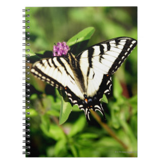 Tiger Swallowtail Butterfly. Papilio glacus. Notebooks