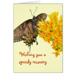 Tiger Swallowtail Butterfly (Papilio glaucas) Item Greeting Card