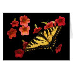 Tiger Swallowtail on Red Flowers