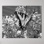 Tiger Swallowtail Print
