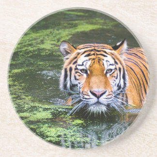 Tiger Swimming Coaster