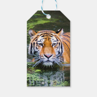 Tiger Swimming Gift Tags