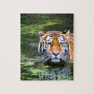 Tiger Swimming Jigsaw Puzzle