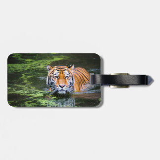 Tiger Swimming Luggage Tag