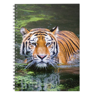 Tiger Swimming Notebook