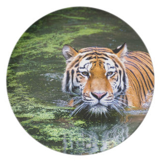 Tiger Swimming Plate