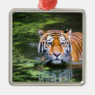Tiger Swimming Silver-Colored Square Decoration
