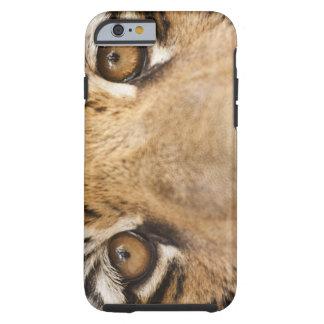 Tiger Tough iPhone 6 Case