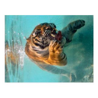 Tiger Underwater Postcard