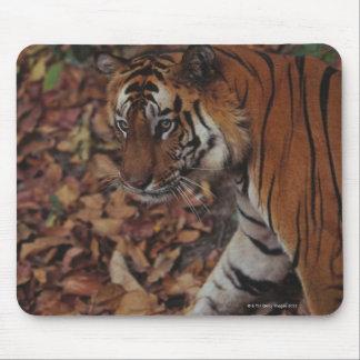 Tiger Walking on Dead Leaves Mouse Mat