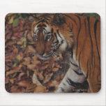 Tiger Walking on Dead Leaves Mousepads