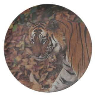 Tiger Walking on Dead Leaves Plate