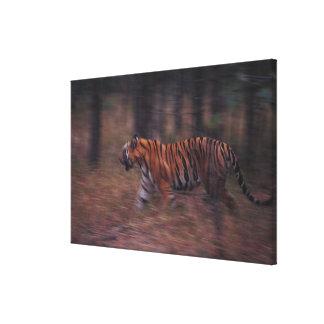Tiger Walking through Forest Canvas Print