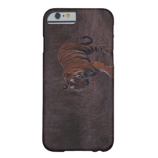 Tiger Walks along Trail Barely There iPhone 6 Case