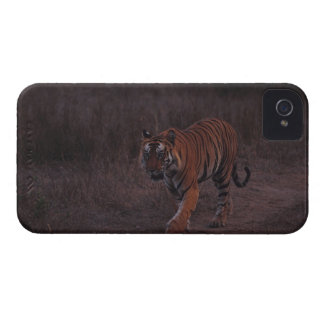 Tiger Walks along Trail iPhone 4 Case