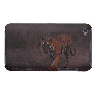 Tiger Walks along Trail iPod Touch Covers
