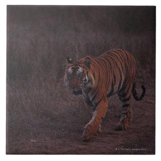 Tiger Walks along Trail Large Square Tile