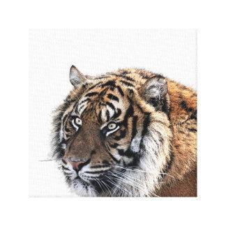 Tiger wild african animal photo kids room nursery canvas print