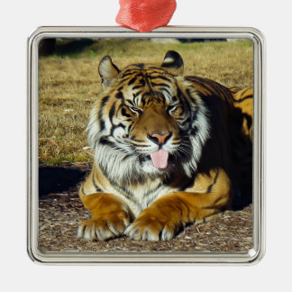 Tiger with a 'tude christmas ornament