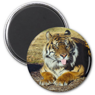Tiger with a 'tude Magnet