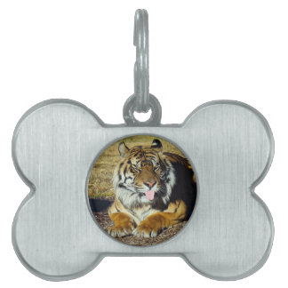 Tiger with a 'tude pet ID tag