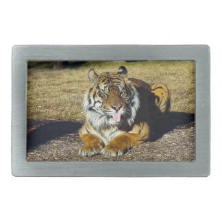 Tiger with a 'tude! rectangular belt buckles