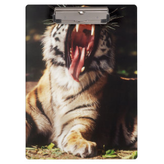 Tiger with mouth open clipboard