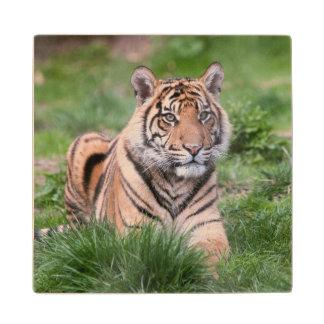 Tiger Wood Coaster