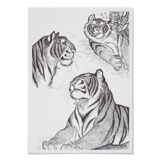 Tigers in black poster