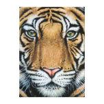Tiger's Last Roar Leinwand Druck