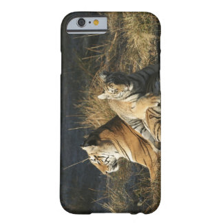 Tigers (Panthera tigris) cub lying on his Barely There iPhone 6 Case